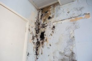 The Landlord-Tenant's Guide to Normal Wear and Tear | Legal